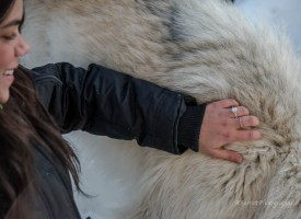 wolf-proposal-a-barrett-photography-11