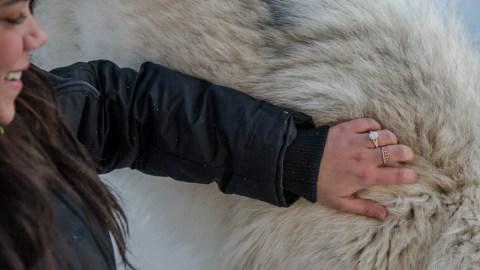 Wolf Proposal