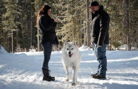 wolf-proposal-a-barrett-photography-4