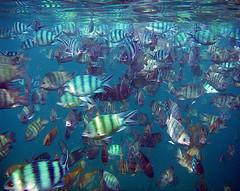 fish lips