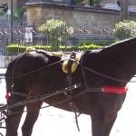 Storytelling – Un cavallo di nome Palermo