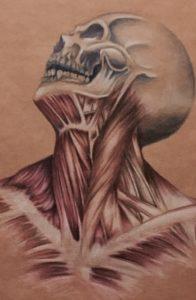 anatomia-disegno