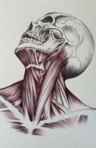 anatomia-foto