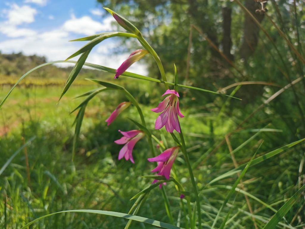 biodiversite-fontcaude-languedoc-occitanie