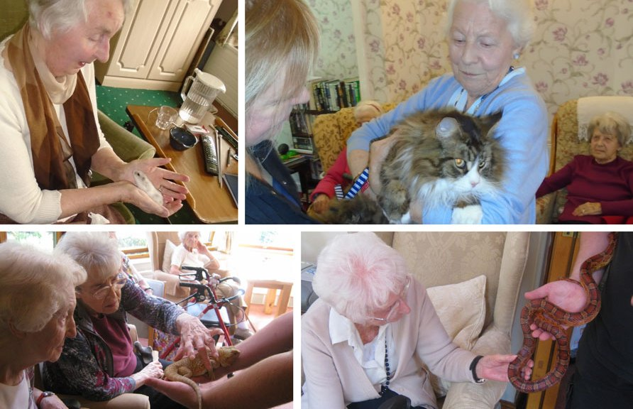 residents meet some pets