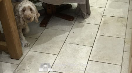 Dog oils helping make this travertine floor is sutton coldfield soiled and difficult to clean