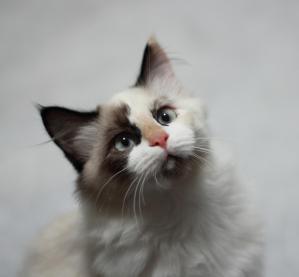 A perfect model of cat behaviour!