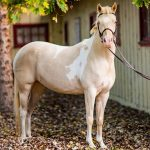Bc Spca S Horse Rescue Program Offers Equine Intervention Abbotsford News