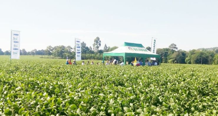Las variedades nacionales de Sojapar, creadas por el convenio INBIO-IPTA, han trascendido fronteras.
