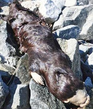 Un misterioso «monstruo» aparece en un lago de Canadá