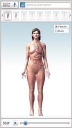 El cuerpo humano, al detalle en 3D