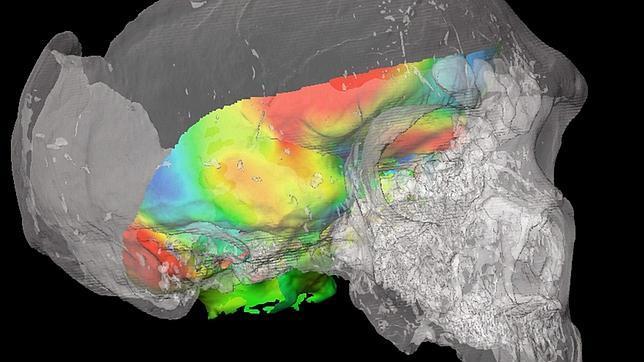 Los primeros «Homo sapiens» podían oler mejor que los neandertales