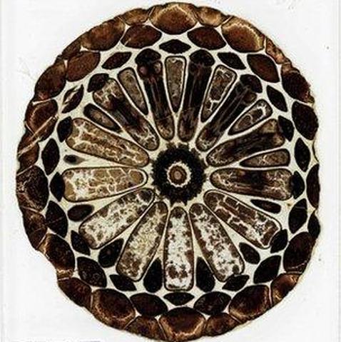 Fósiles perdidos de Darwin aparecen en un viejo armario