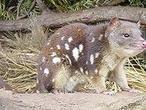 Las diez especies que deberían salvarse de la extinción