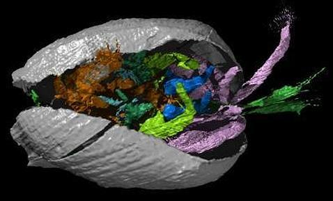 Un «tesoro» animal de 425 millones de años