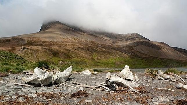 El musgo antártico de 2.200 años
