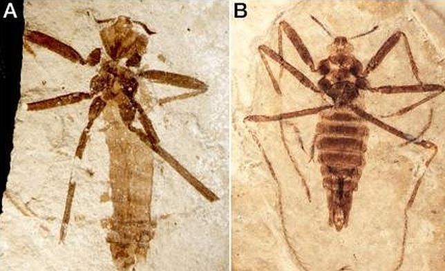 La pulga que se alimentaba de dinosaurios