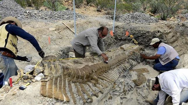 Recuperan 50 vértebras de la primera cola articulada de dinosaurio en México