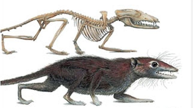 Así eran los proto-mamíferos que convivieron con los dinosaurios