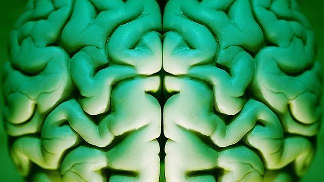 ¿La inteligencia está en los genes?