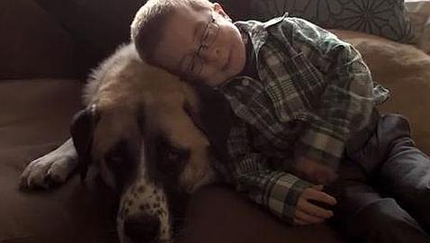 Un niño enfermo y su perro de tres patas, protagonistas de una historia de amistad que revoluciona la Red
