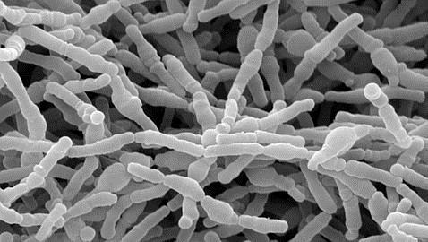 La lactancia modifica el sistema inmune más de lo que se creía
