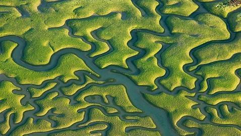 Así son de verdad las marismas del Guadalquivir de «La isla mínima»