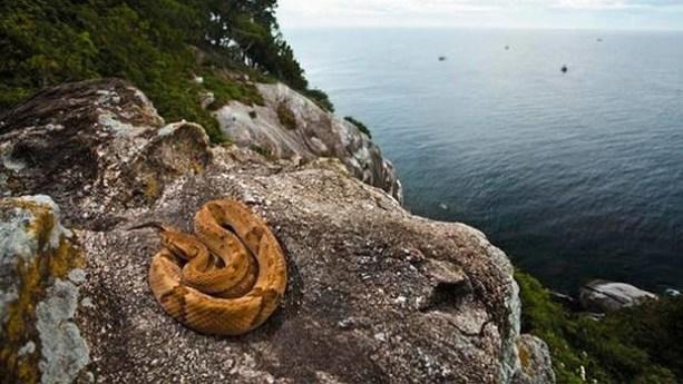 Resultado de imagen de Isla de Queimada Grande