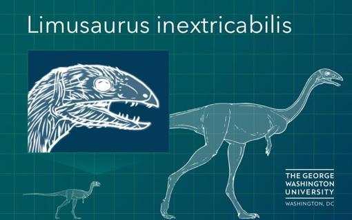 Un Limusaurus adulto a la derecha y sin dientes, y uno joven con dientes, a la izquierda