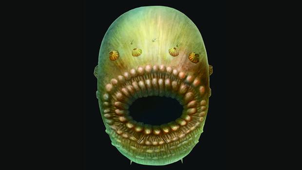 Recreación artística del Saccorhytus. La criatura real no medía más de un milímetro