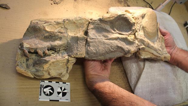 Carcasa del dinosaurio Isaberrysaurus