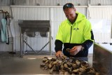 Oyster farming for life