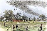 A drawing showing hunters shooting at a large flock of passenger pigeons