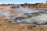 A fire burning in the ground in a cattle yards.