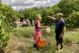 Brian Burton standing with a volunteer and pointing past other orchards to the trees.