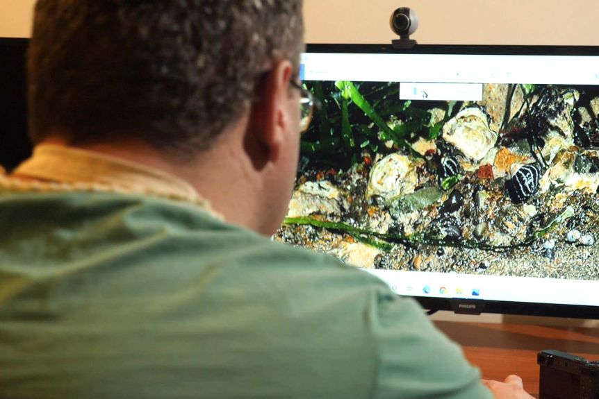 Over shoulder view of the artist looking at images of sea creatures enlarged on a computer screen