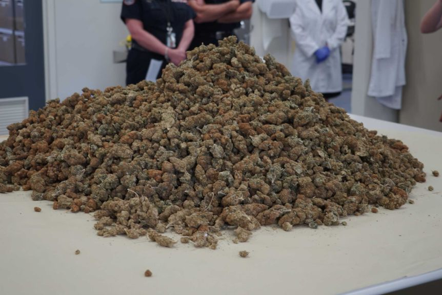 A large pile of cannabis with police officers standing cross-armed in the background.
