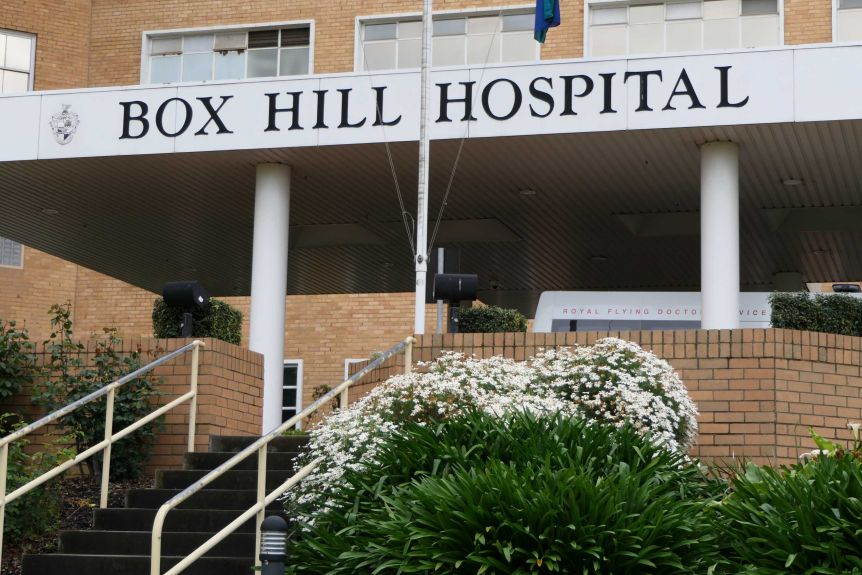 The exterior sign of the Box Hill Hospital, underneath which a bush of white flowers blooms next to a concrete staircase.