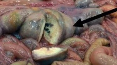 A group of slimy balls with one cut open with an arrow pointing to it
