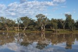 Looking across the Balonne River at river gums from St George in southern Queensland.