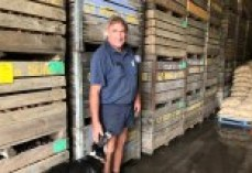 A man in a blue work shirt and shorts standing in front of pallets of potatoes.
