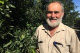 Irrigator Rob Mansell pictured with his fruit trees on his farm on the edge of Hattah Lakes.