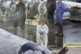 A man inspects the whale carcass while someone else takes a photo.