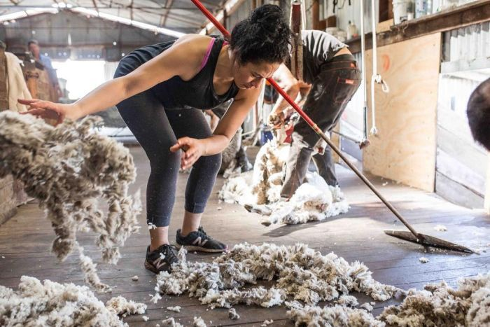 A roustabout at work in a shearing shed in Kojonup, Western Australia.