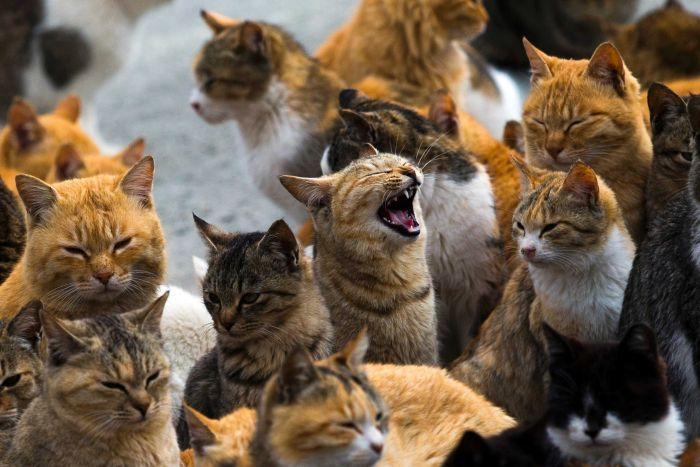 Cats crowd the harbour on Aoshima Island