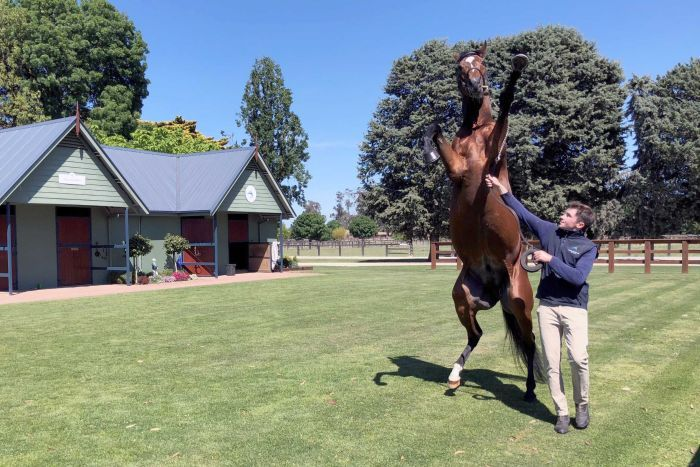 A trainer walks a horse through a yard. The horse is on his hind legs.