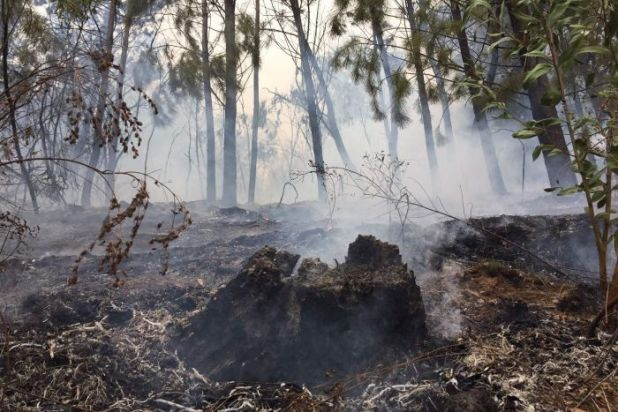 Smoke and ash in a forest after fire.