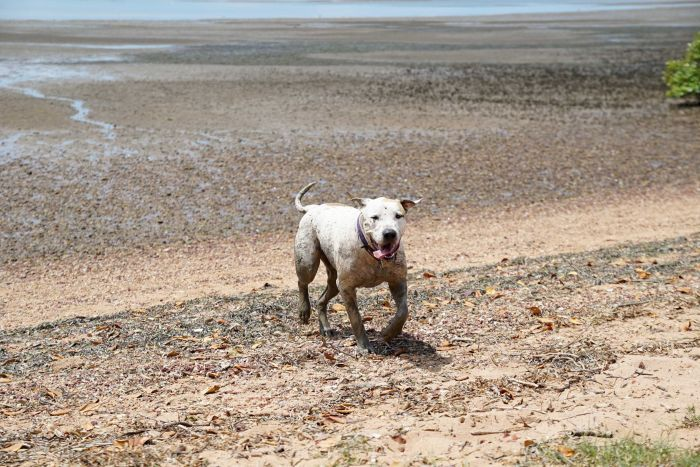 A dog runs in the mud at the harbour, tongue lolling.