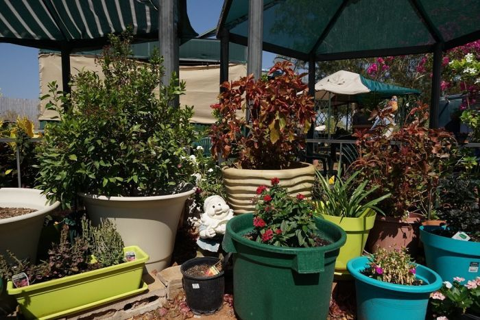 Pot plants are arranged around an outside seating area.