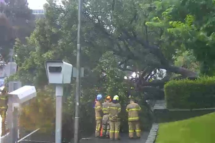 Emergency crews gather at the base of a tree that has fallen over.